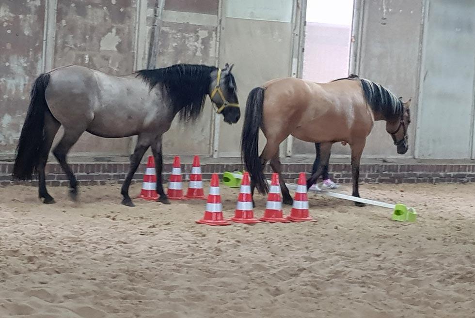 Pferdegestuetzes-Coaching-Kurs