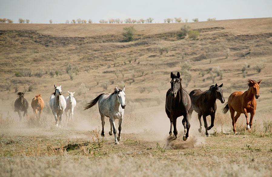 Pferdegestuetztes-Coaching-Mustangherde