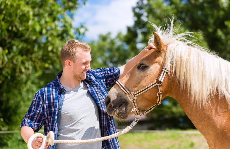 Pferdegestueztes-Coaching